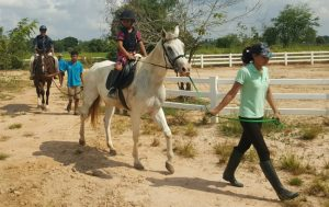 horse farm in udon thani