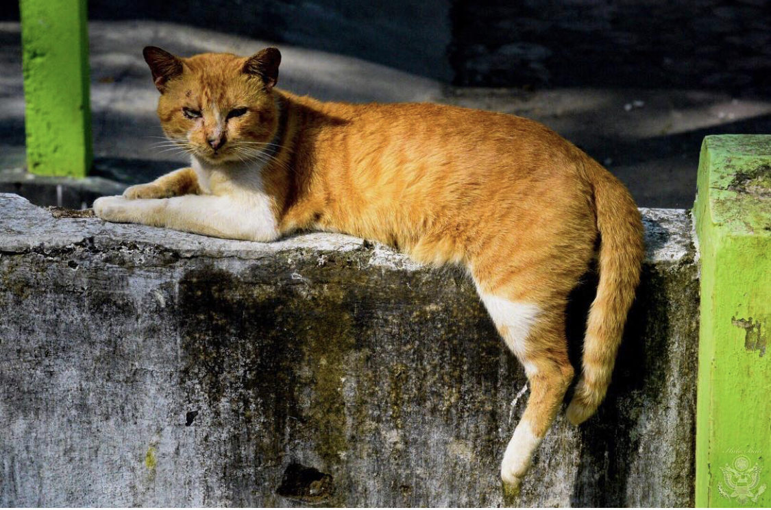 Thai Disease Center Warns Pussy-Cat Lovers