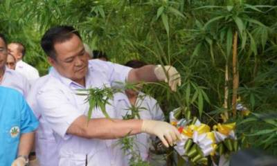 thai cabinet and cannabis